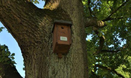 Singvögel im Kampf gegen Eichenprozessionsspinner